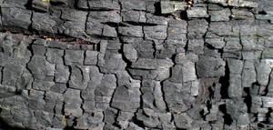 Stock Texture - Burnt Wood by rockgem