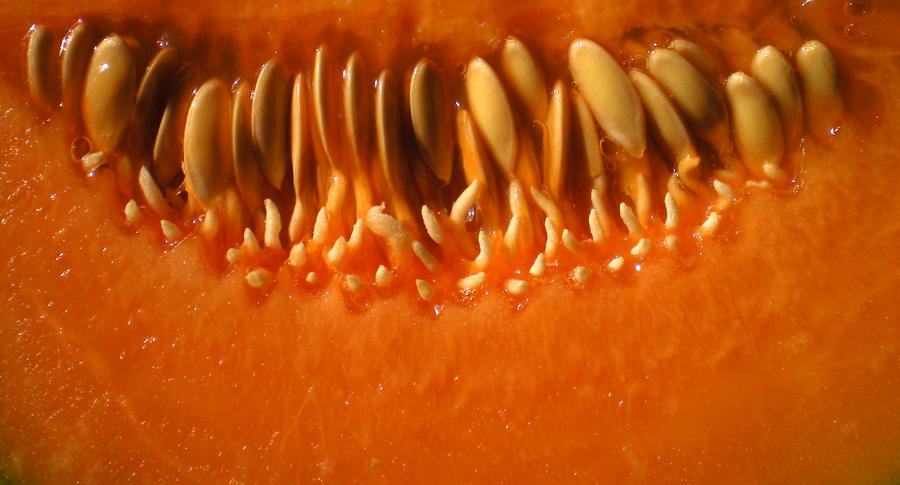 Stock Texture - Melon