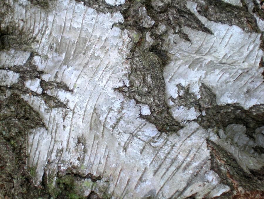 Stock Texture - Silver Birch Bark VII by rockgem