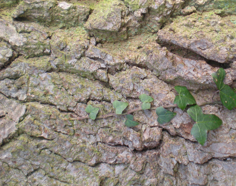 Stock Texture - Bark and ivy by rockgem