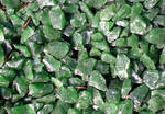 Stock Texture - green stone chips