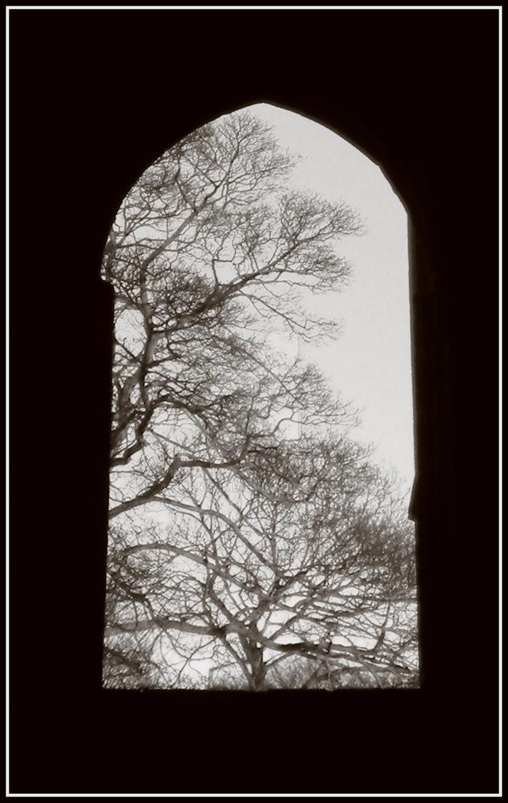 Framed Branches... VI by rockgem