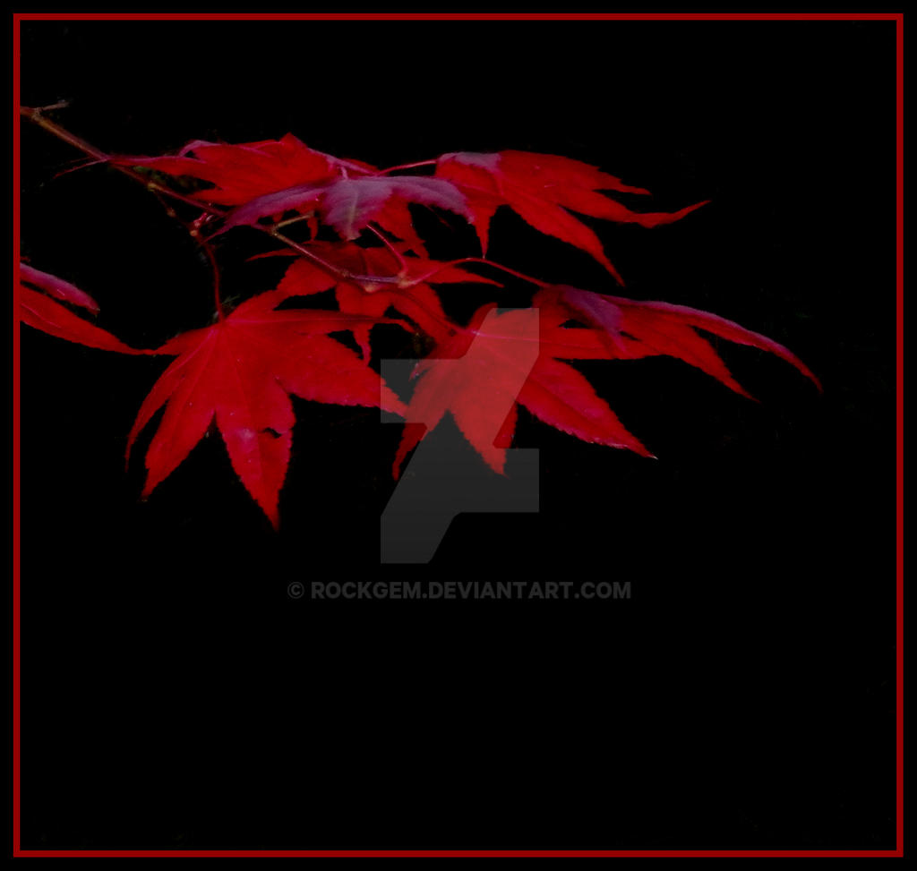 The red leaves... II by rockgem
