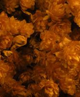 Stock Texture - Dried Hops I by rockgem