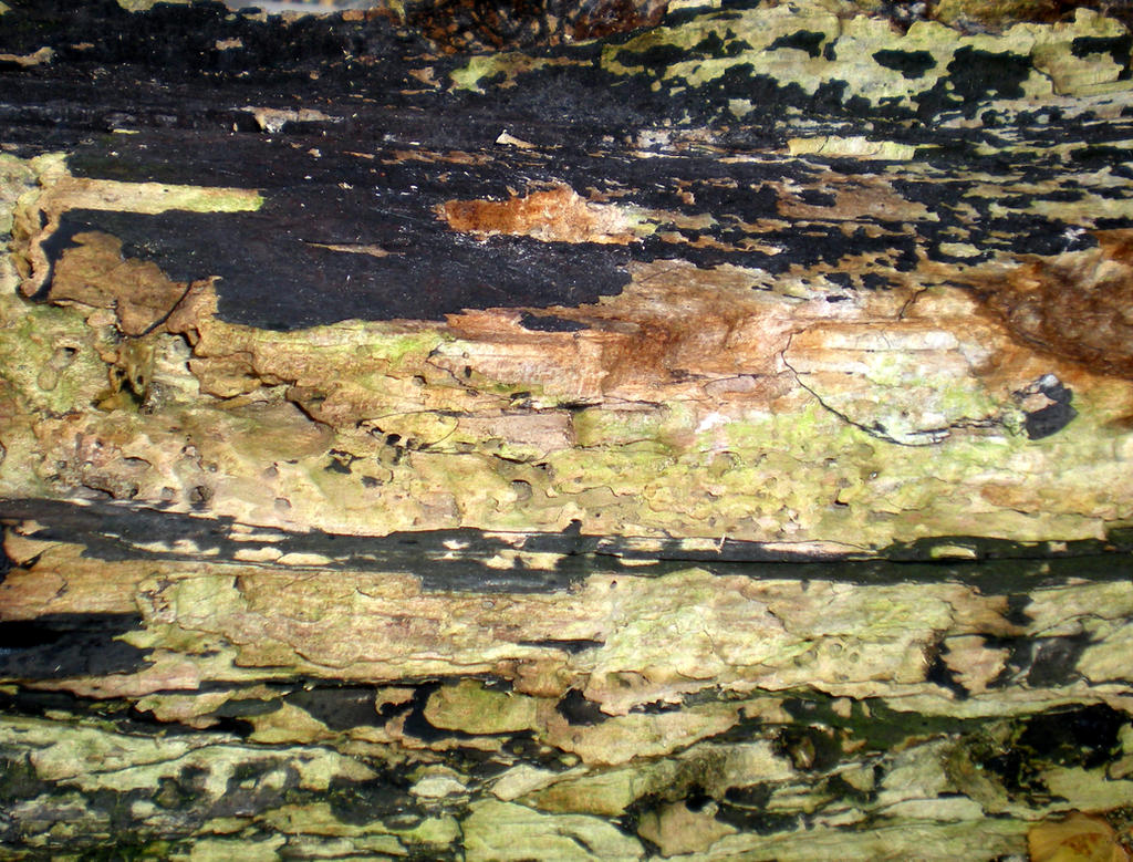 Stock Texture - Decayed Wood IV