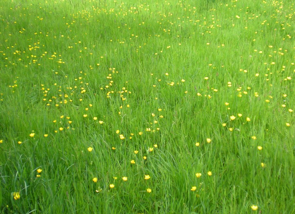 Stock - meadow II by rockgem