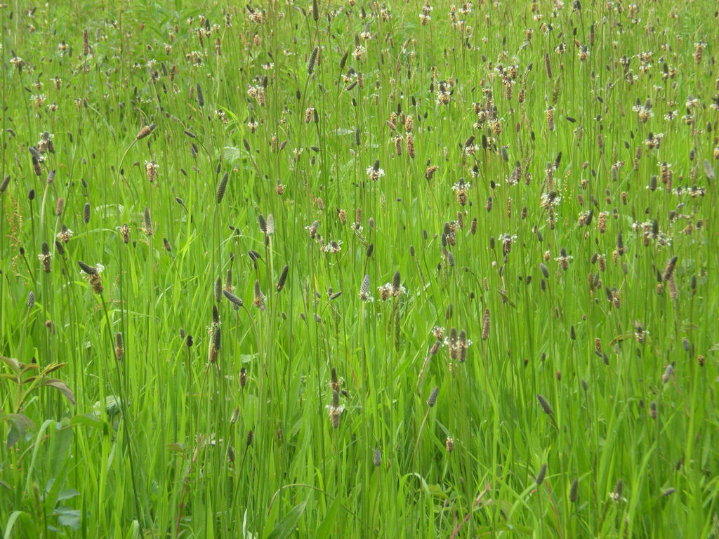 Stock - Meadow by rockgem