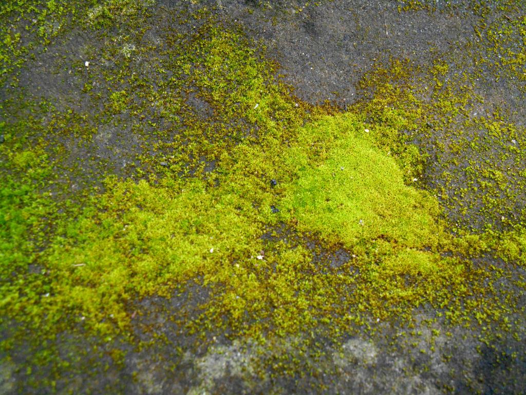 Stock texture - Moss on stone II by rockgem on DeviantArt Seamless Moss Rock Texture