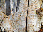 Stock texture - rotten wood