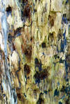 Stock Texture - Rotten Wood VII