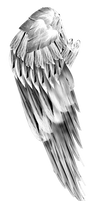 fractal manip stock - angel wing