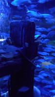 Stock - Underwater scene III