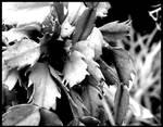 (black and white) Botanical details IV