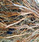 Stock texture - roots
