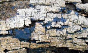 Stock texture - deadwood II