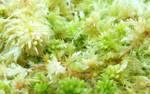 Stcok texture - mossy II