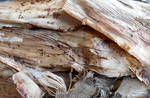 Stock Texture - tropical bark VIII