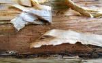 Stock texture - tropical bark VII