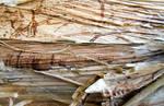 Stock texture - tropical bark VI