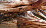 Stock Texture - tropical bark IV