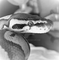 Scaled Cutie III (black and white)
