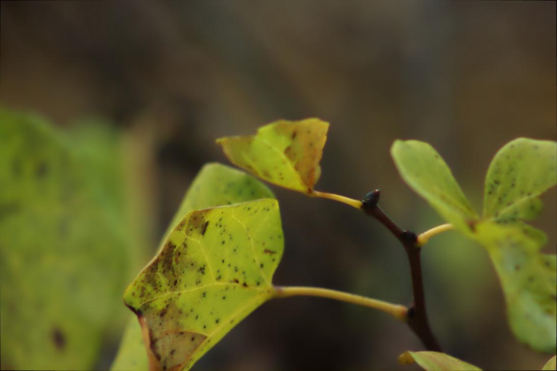 Leaves Closeup by giovimonto