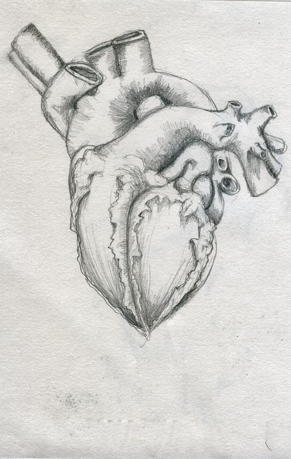 Realistic Knife In The Heart Drawing: Heart Realistic By Manfishinc On DeviantArt