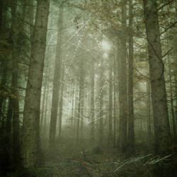 Forest Tranquility III