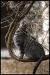 Upward Cat?