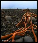 Kelp by ElenionTolto