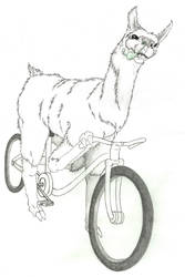 Sick llama on a bicycle !!!