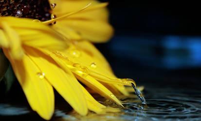 Every teardrop is a waterfall by Nunula