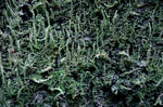 Mchy i porosty / Mosses and lichens by edheene