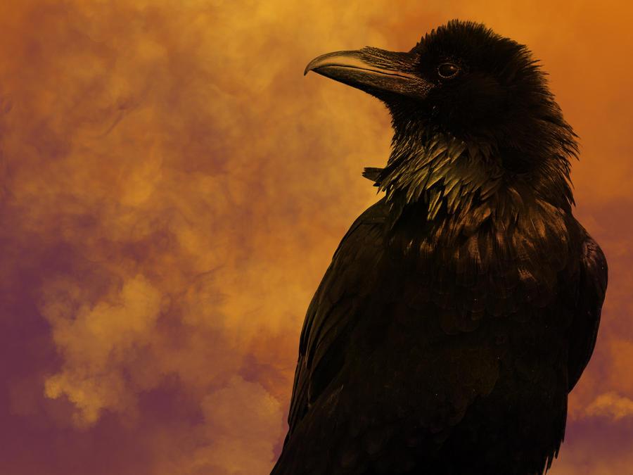 Raven's Request by DarkRiderDLMC