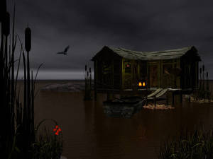nighttime on the swamp