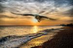 Seagul in brighton beach