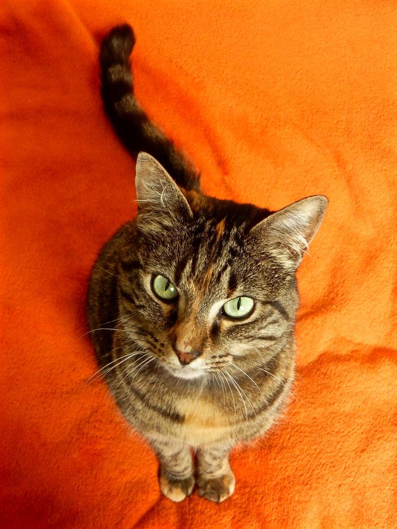 Pumpkin Spice Kitty by modestlobster
