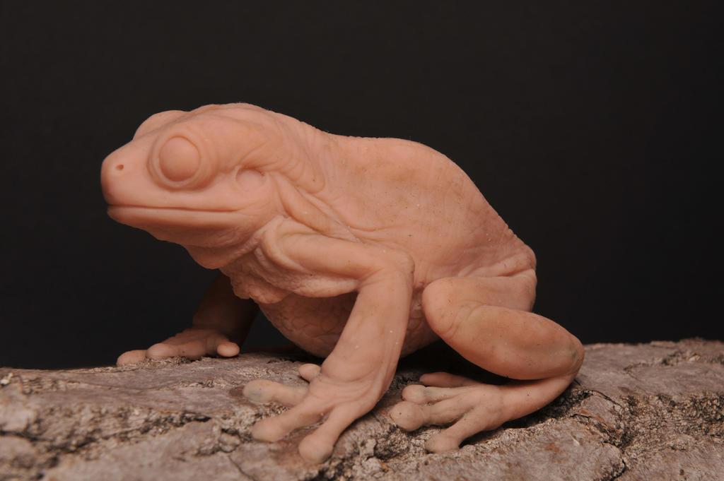 Australian tree frog by Heliot8