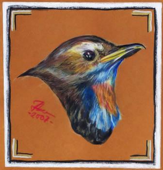 lil bird by Jefrma