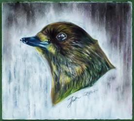 Lil bird 2 by Jefrma