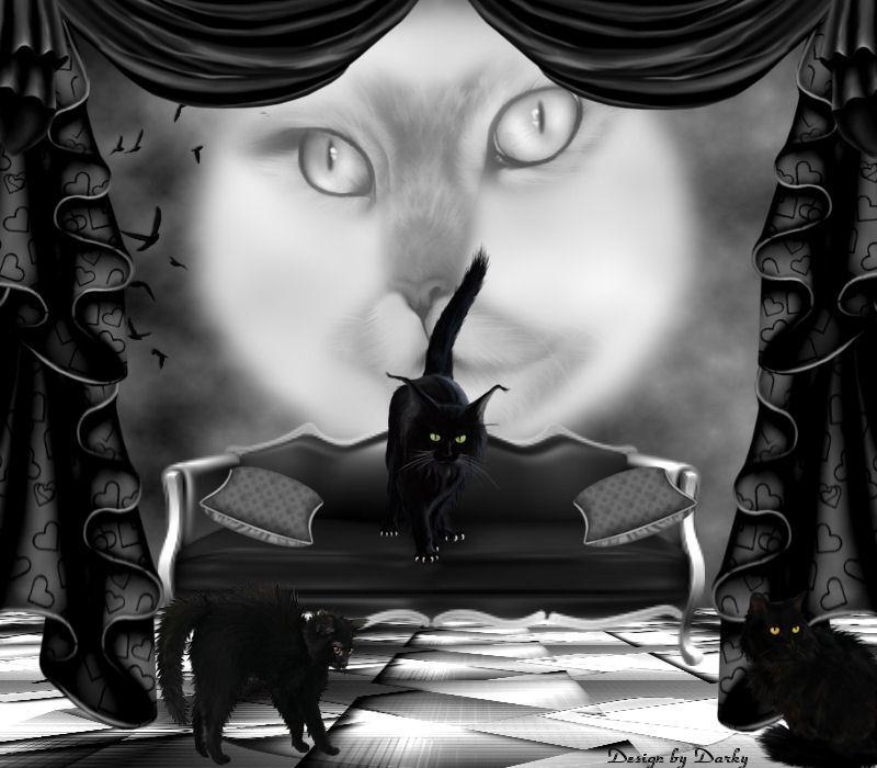 CatNight by Darky747