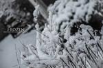 Frozen 8 by ALfannan8w