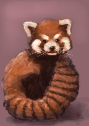 Red panda by SVeet-Artist