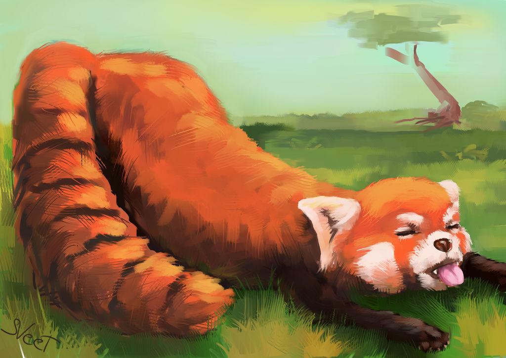 Red panda - stretching by SVeet-Artist