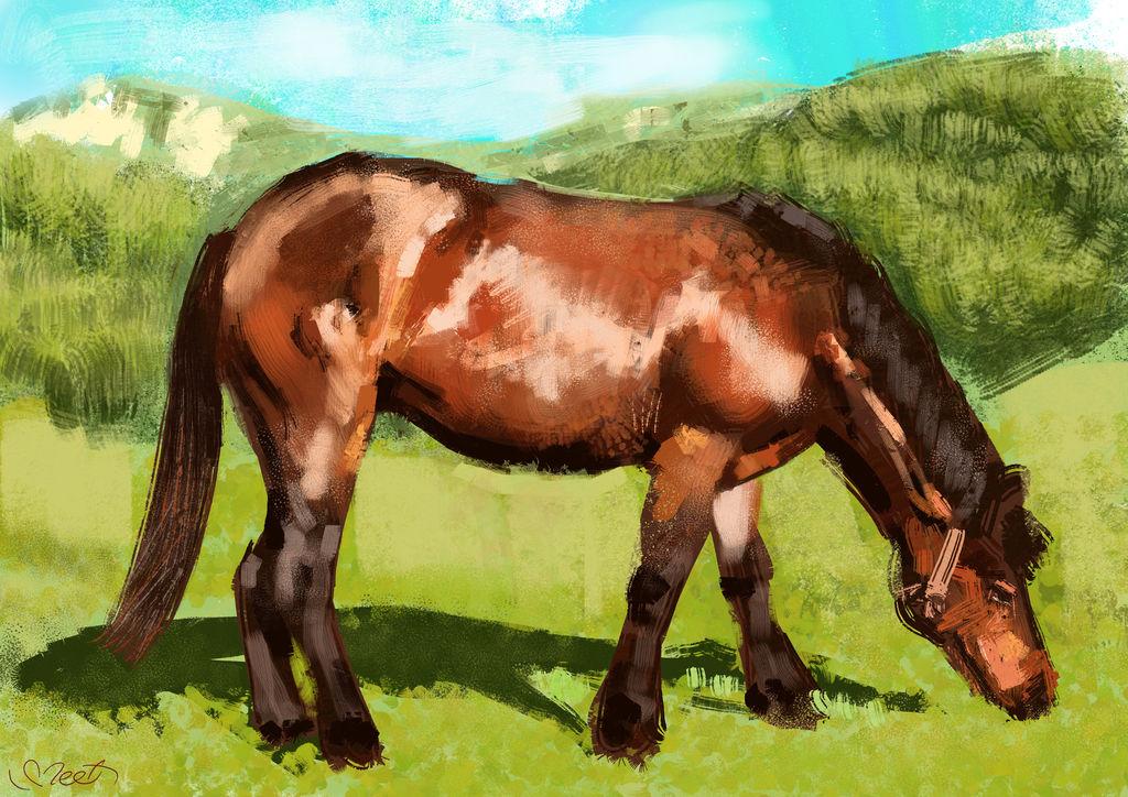 Horse Study by SVeet-Artist