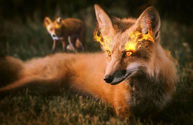 Fire fox by SVeet-Artist