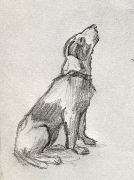 Sitting Dog by Mataria on DeviantArt