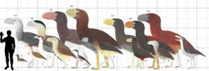 Terror Birds Size Chart