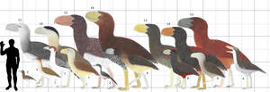 Terror Birds Size Chart by Cefal27