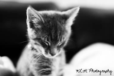 Louie's Sleepy